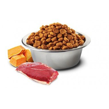 N&D grain free potiron canard (chat)