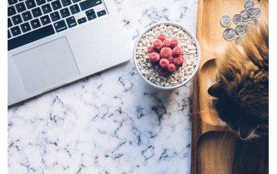 Croquettes Sans Céréales Chien et Chat : Pour ou Contre ?