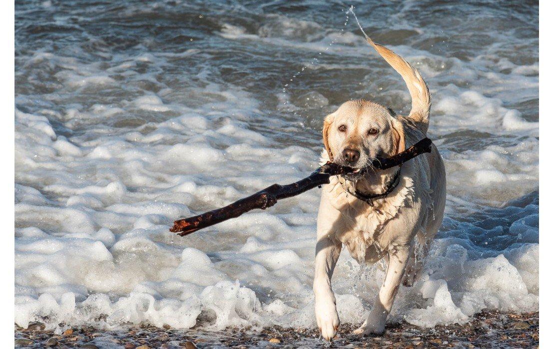 Top 10 des activités de plein-air en été avec son chien