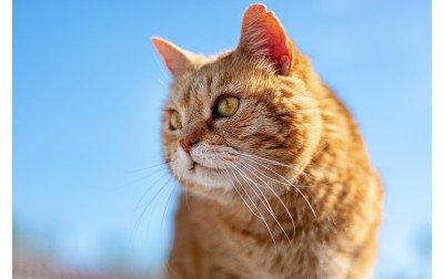 Comment bien Nourrir votre Chat Senior ?   Tous nos Conseils