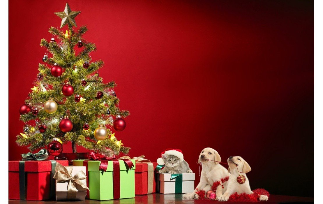 Noël pour chiens et chats | 8 idées de cadeau surprenantes